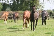 Compton Stud Horses